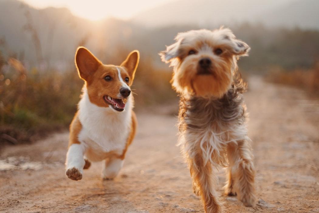 速報兵庫県で世話中の犬に噛まれ男性が亡くなる For Freedom